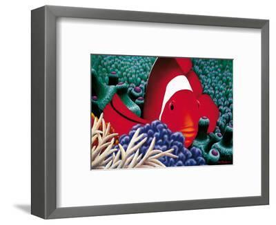 Diva, Tomato Clown Fish-Mark Mackay-Framed Art Print