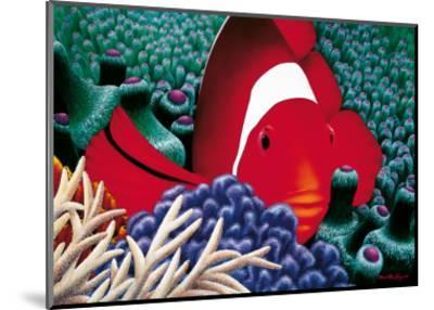 Diva, Tomato Clown Fish-Mark Mackay-Mounted Art Print
