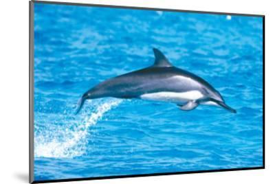 Hawaiian Spinner Dolphins-Michael S^ Nolan-Mounted Art Print