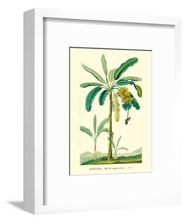 Banana Tree, Botanical Illustration, c.1855-Ch^ Lemaire-Framed Art Print
