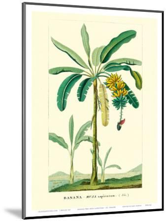 Banana Tree, Botanical Illustration, c.1855-Ch^ Lemaire-Mounted Art Print