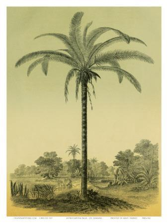 Astrocaryum Chambira Palm Tree, Botanical Illustration, c.1854-Ch^ Lemaire-Framed Art Print