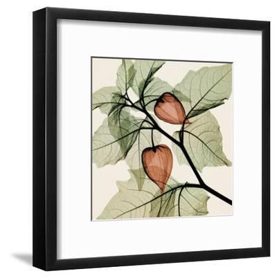 Japanese Lantern-Steven N^ Meyers-Framed Art Print