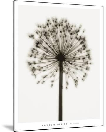 Allium-Steven N^ Meyers-Mounted Art Print