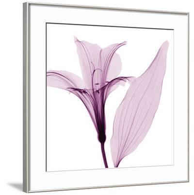Alstromeria III-Steven N^ Meyers-Framed Art Print