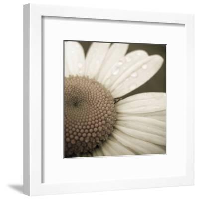 Daisy Morning-Jean-Fran?ois Dupuis-Framed Art Print