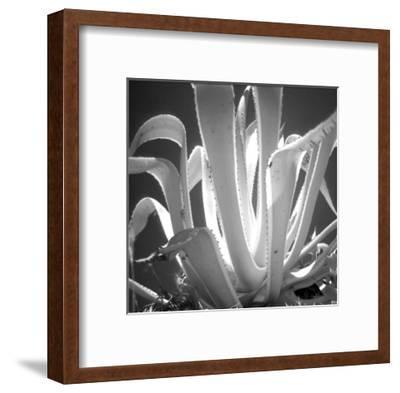 Tropical Plant I-Jean-Fran?ois Dupuis-Framed Art Print