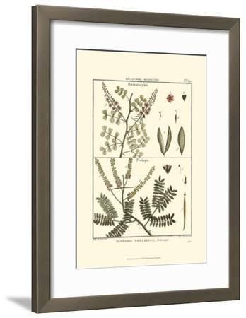 Fern Classification II-Denis Diderot-Framed Art Print