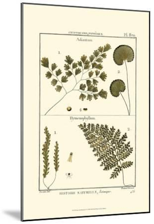 Fern Classification IV-Denis Diderot-Mounted Art Print
