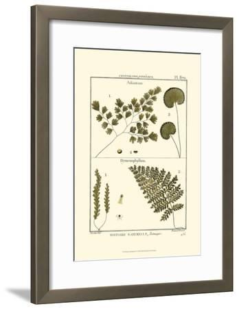 Fern Classification IV-Denis Diderot-Framed Art Print