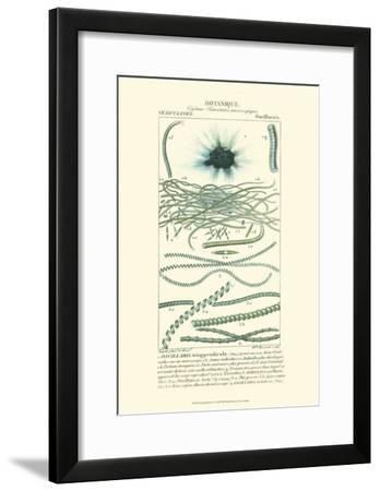 Turpin Botany IV-Turpin-Framed Art Print