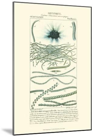 Turpin Botany IV-Turpin-Mounted Art Print