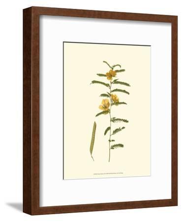 Native Beauty II-Louis Prang-Framed Art Print