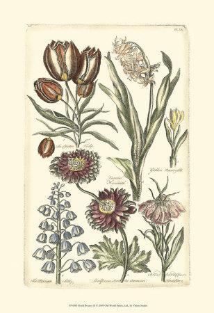Floral Bounty II--Framed Art Print