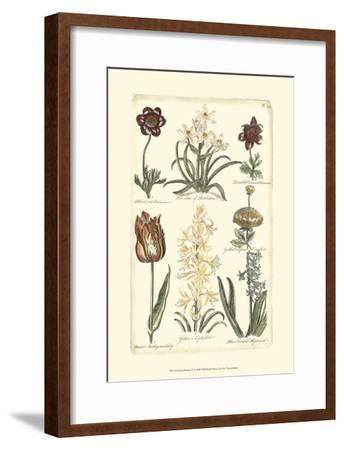 Floral Bounty IV--Framed Art Print