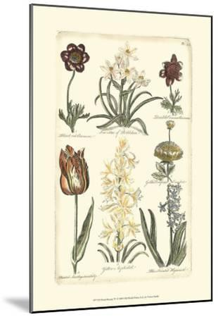 Floral Bounty IV--Mounted Art Print