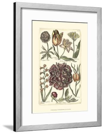 Floral Bounty V--Framed Art Print