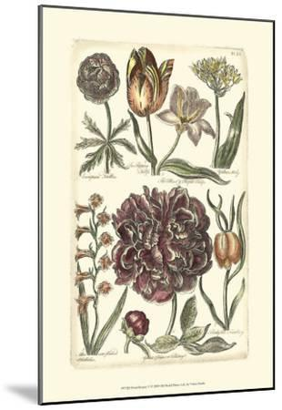 Floral Bounty V--Mounted Art Print