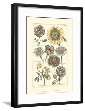 Floral Bounty VI--Framed Art Print