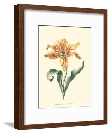 Tulipa I--Framed Art Print