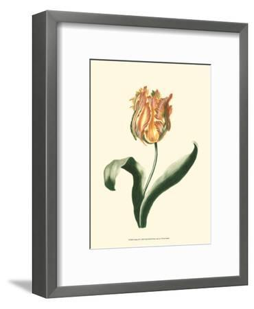 Tulipa II--Framed Art Print