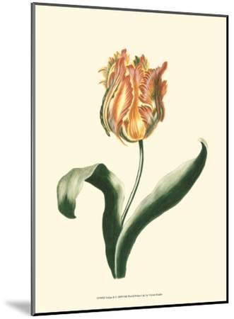 Tulipa II--Mounted Art Print