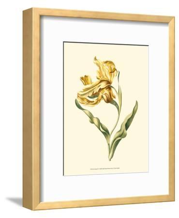 Tulipa IV--Framed Art Print