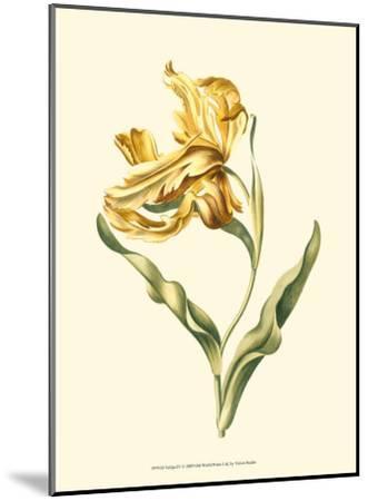 Tulipa IV--Mounted Art Print