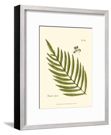 Small Antique Fern I--Framed Art Print