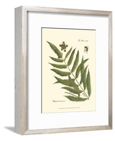 Small Antique Fern II--Framed Art Print