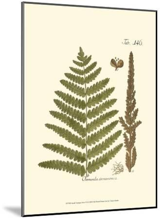 Small Antique Fern VI--Mounted Art Print