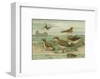 Shore Gathering V-Franz Eugen Kohler-Framed Art Print