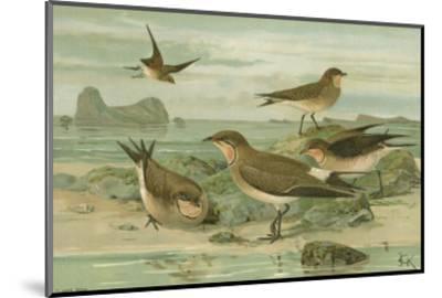 Shore Gathering V-Franz Eugen Kohler-Mounted Art Print