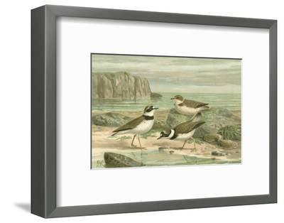 Shore Gathering VI-Franz Eugen Kohler-Framed Art Print
