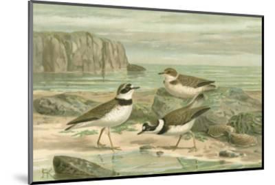 Shore Gathering VI-Franz Eugen Kohler-Mounted Art Print