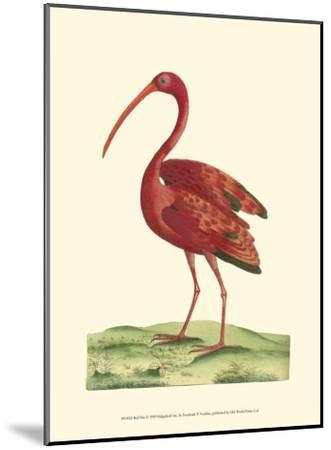 Red Ibis-Frederick P^ Nodder-Mounted Art Print