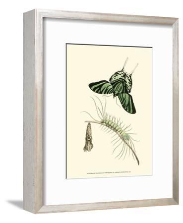 Butterfly Transformation II--Framed Art Print