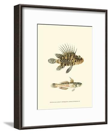 Fish of the Coral Reef VI--Framed Art Print