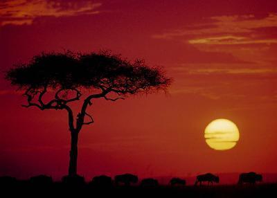 Wild Beast Migration, Masai Mara, Kenya-Dee Ann Pederson-Art Print