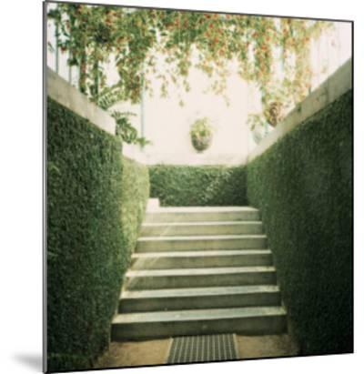 Serres 11, 2008-Alexandre Bibaut-Mounted Premium Giclee Print