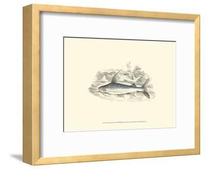 Lizars' Game Fish IV-W^h^ Lizars-Framed Art Print