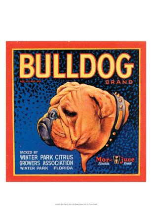 Bull Dog--Art Print