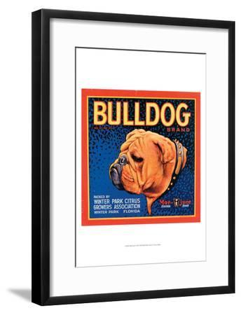 Bull Dog--Framed Art Print