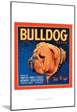 Bull Dog--Mounted Art Print