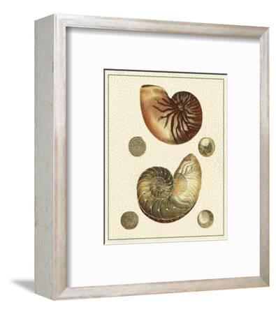 Crackled Antique Shells VII-Denis Diderot-Framed Art Print