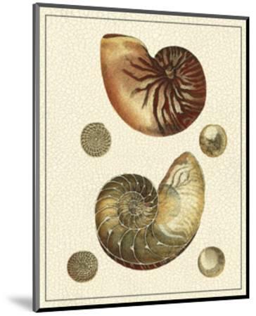 Crackled Antique Shells VII-Denis Diderot-Mounted Art Print