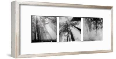 Enchanted Forest--Framed Art Print