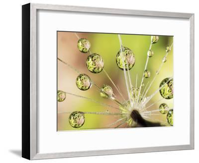Dandelion-Christopher Talbot Frank-Framed Art Print