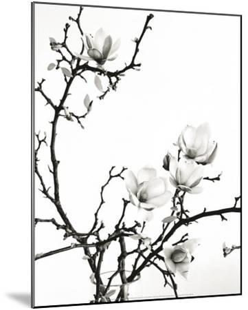 Branch of Magnolia-Henry Wilson-Mounted Art Print