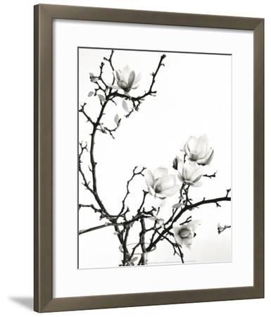 Branch of Magnolia-Henry Wilson-Framed Art Print